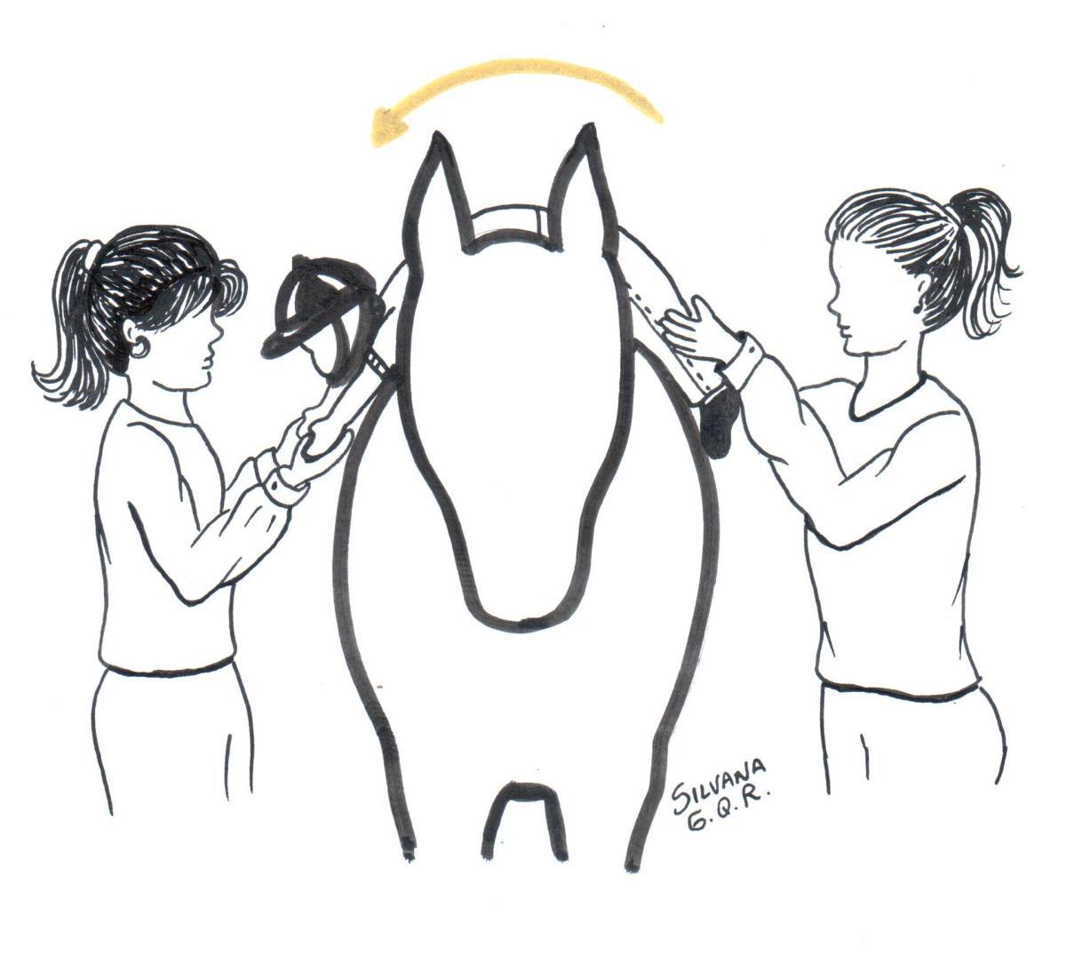 Exercício do jacaré na equoterapia