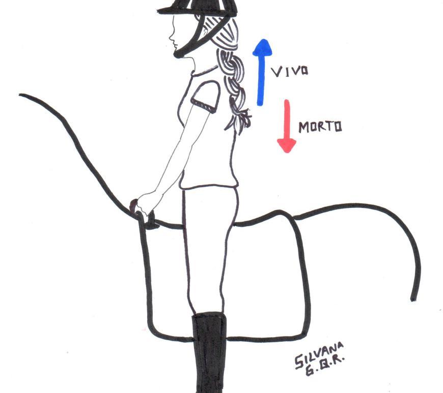Desenho de uma praticante de equoterapia, montada um cavalo, na posição em pé, sobre os estribos.